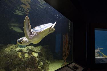 pagebodyhalf_aquarium
