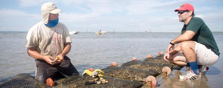 pagetop_shellfishlab
