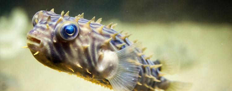 pagetop_aquariumvisitus